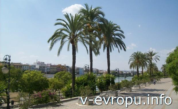 Пальмы в Севильи