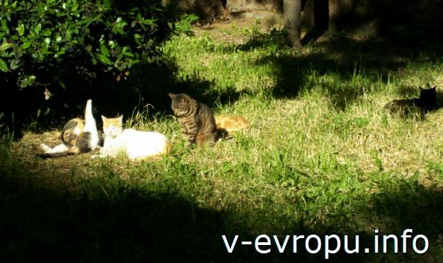 Кошки в Риме  в парке Калипари