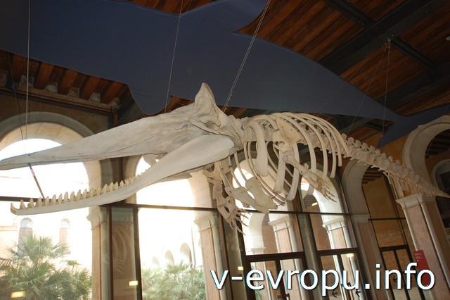 Музей натуральной истории в Венеции
