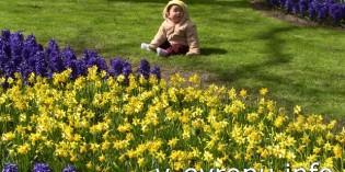 Поездка к тюльпанам в парк Кейкенхоф