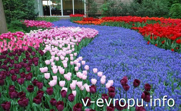Тюльпаны Кёйкенхофа в апреле 2014