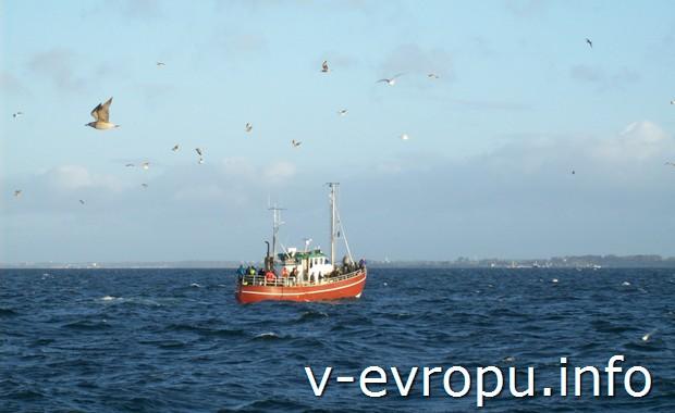На таких катерах в Дании ловят  в октябре норвежскую селедку