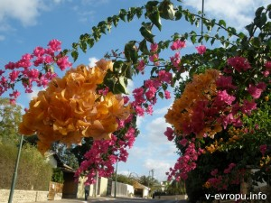 Город-сад Герцлия