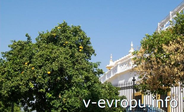 Апельсиновые деревья в Севилье (Испания, Андалусия)
