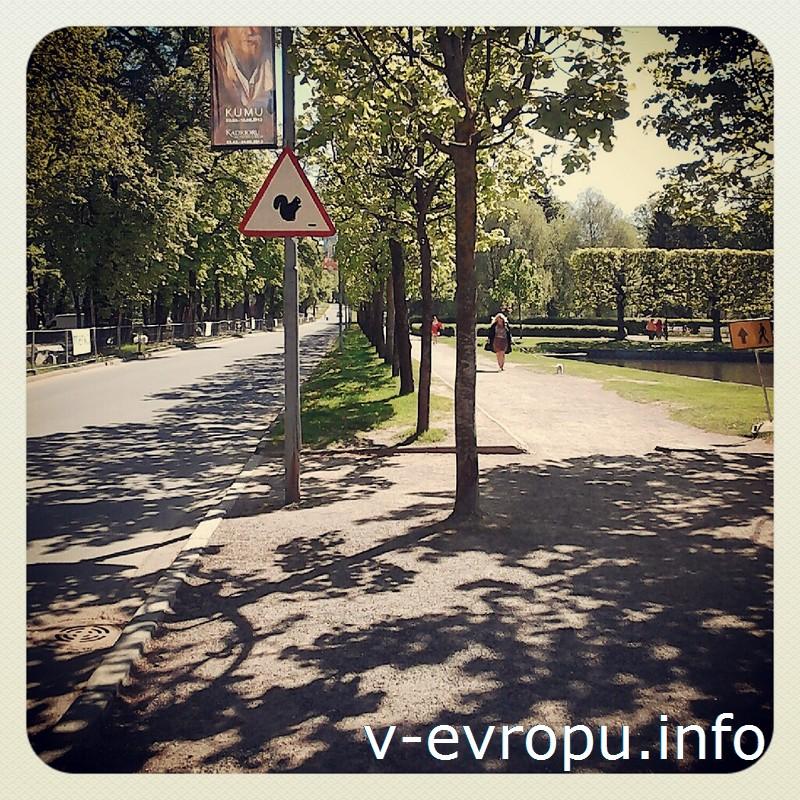 Дорожные знаки в Кадриоргском парке предупреждают быть бдительными: на дорогу может выскочить белка!