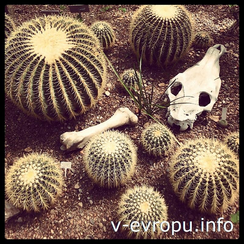 Wild Wild West: кактусы в теплицах Таллинского Ботанического Сада