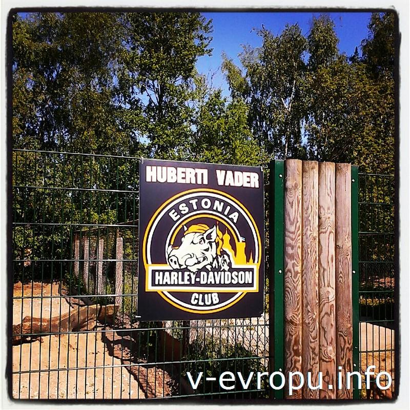 Клуб Харлей Дэвидсон Эстония шефствует над одним из вепрей Таллинского зоопарка