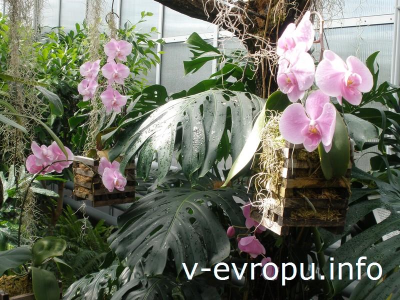 Орхидеи в теплицах Ботанического сада Таллина: почувствуйте себя в субтропиках