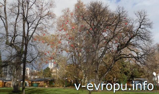 В городском парке Вены