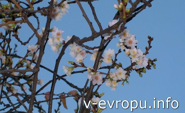 Весна в Дюссельдорфе