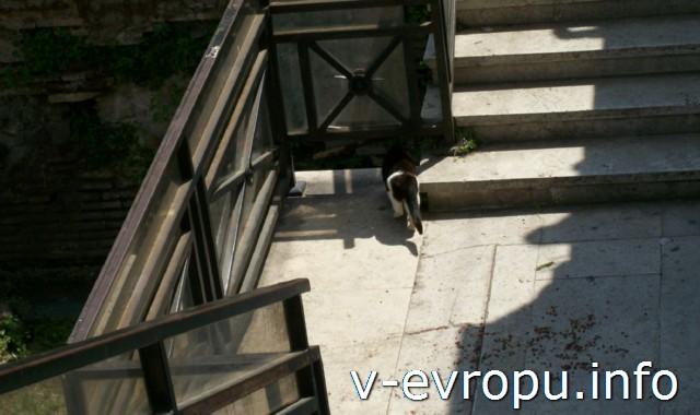 На Ареа Сакра в Риме все для кошек... пока..