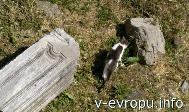 Рим. Кошки на Ларго ди Торре-Арджентина