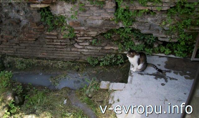 Кошки на Ареа Сакра в Риме