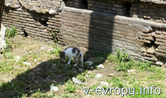 Кошки в Риме в родном доме не Ареа Сакра