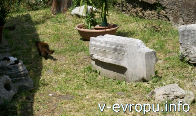 Рим..Кошки.