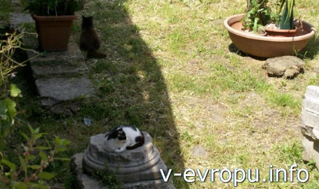 """Кошки в Риме на Ареа Сакра. Современная """"богиня"""" древнего Рима!"""