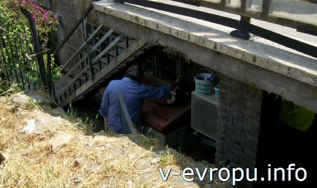 Доброволец-римлянин, который ухаживает за кошками на Ареа Сакра в Риме