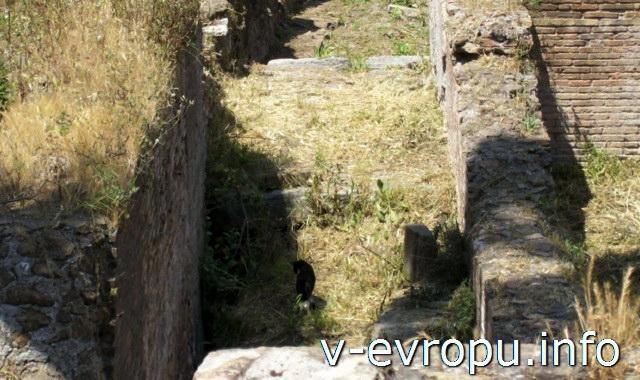 Кошки в Риме на Ареа Сакра у себя дома