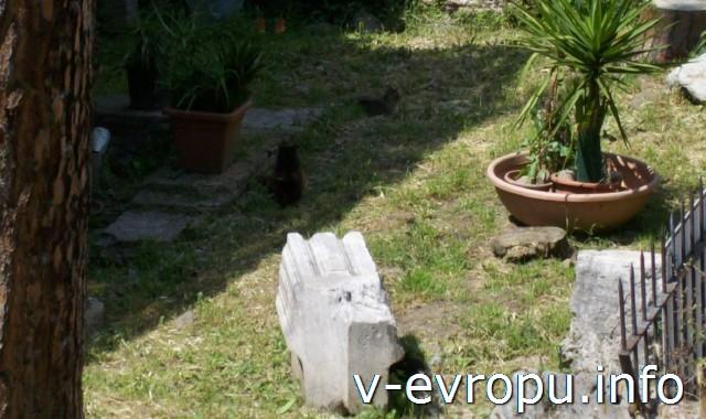 Кошки в Риме на Ареа Сакра весной всегда в тени.. жарко!