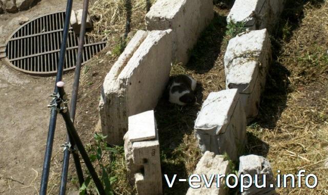 Кошки в Риме на Ареа Сакра весной.