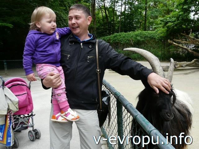 Прогулка по Мюнхенскому зоопарку с детьми