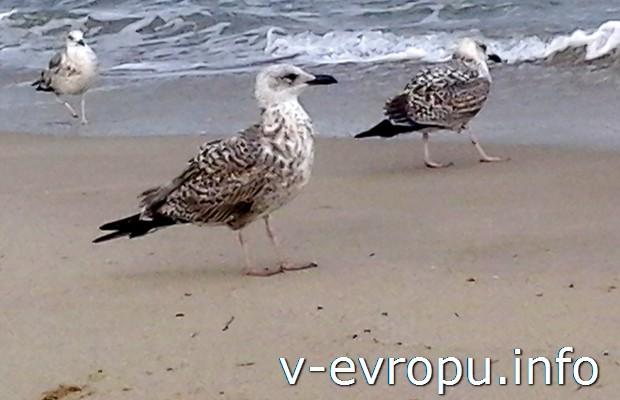 На лето в Варну! Путешествия для пенсионеров