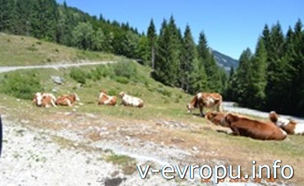 Австрийские Альпы летом